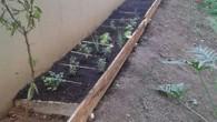 O condomínio Lótus inaugurou a mini-horta no dia 08/08 às 11h com ajuda das crianças e dos responsáveis.
