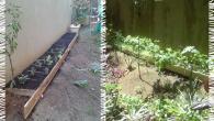 3 meses depois da criação da mini-horta Lótus!!!